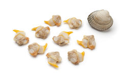 Fresh cooked cockles Stock Photos