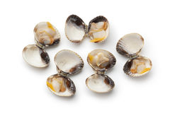 Fresh cooked cockles in the shell Stock Image