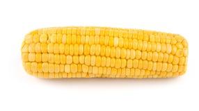 Fresh cooked corn cob Royalty Free Stock Image