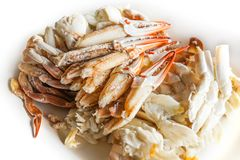 Fresh cooked crab meat seafood white isolated background. Thailand royalty free stock photography