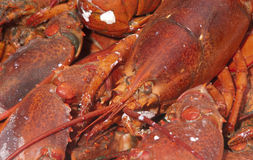 Fresh cooked lobster Royalty Free Stock Images