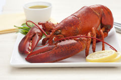 Fresh cooked lobster Royalty Free Stock Photo