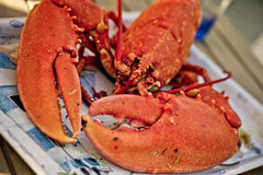 Fresh cooked Lobster Royalty Free Stock Image