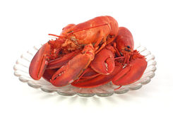 Fresh cooked lobsters. A heaping tray of freshly cooked Maine lobsters against a white background Royalty Free Stock Images