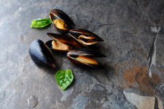 Fresh cooked mussels Stock Photos