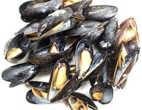 Fresh cooked mussels Stock Photography