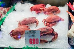 Fresh Cooked Pacific Stone Crabs in freezer case Royalty Free Stock Photo