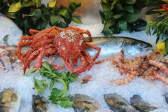 Fresh and cooked seafood in ice. On display case Stock Photos