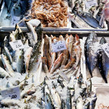 Fresh cool fish on ice at street market. In Bologna, Italy Stock Photo