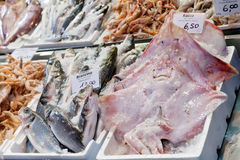 Fresh cool fish on ice at street market Stock Photos