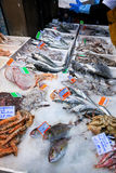Fresh cool fish on ice at street market. Fresh cool fish on ice at fish market in Bologna, Italy Stock Photography