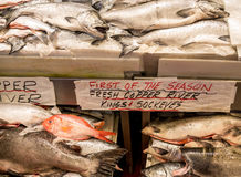 Fresh Copper River Salmon Royalty Free Stock Images