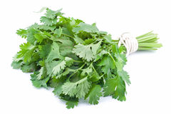 Fresh coriander Stock Photos