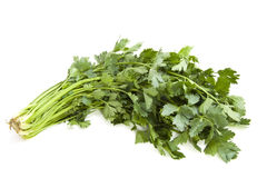 Fresh coriander Royalty Free Stock Photography