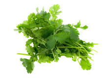 Fresh coriander Stock Images
