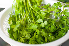 Fresh coriander in a basket Stock Photos