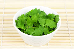 Fresh coriander or cilantro leaves in a white bowl. Fresh coriander leaves, also known as cilantro, Chinese parsley and dhania, in a white porcelain bowl on Royalty Free Stock Photo