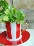 Fresh coriander herbs in a lovely red and white striped cup. Fresh coriander herbs in a lovely red and white striped cappuccino cup stock images