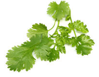 Fresh coriander leaves Stock Images