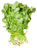 Fresh coriander leaves in bunch isolated Royalty Free Stock Photo