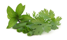 Fresh Coriander leaves with mint and sliced onion leaves Royalty Free Stock Images