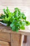 Fresh coriander leaves stock images