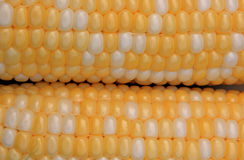 Fresh Corn Royalty Free Stock Photography