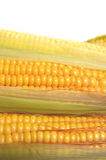 Fresh corn. Green and yellow Royalty Free Stock Images