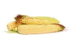 Fresh corn Royalty Free Stock Images