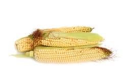 Fresh corn Stock Images