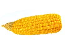 Fresh corn. Tasty kitchen. Fresh corn isolated on white Royalty Free Stock Images
