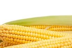 Fresh corn Royalty Free Stock Photos