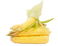 Fresh corn Stock Image