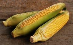 Fresh corn Royalty Free Stock Photo