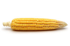 Fresh corn. On white background Royalty Free Stock Photography