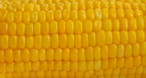 Fresh corn Stock Photos