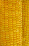 Fresh corn Royalty Free Stock Images
