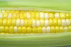 Fresh corn Royalty Free Stock Photos