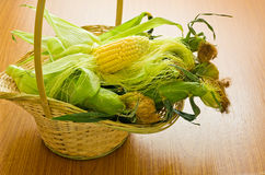 Fresh corn in basket Royalty Free Stock Images