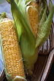 Fresh corn in a basket royalty free stock photos