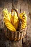 Fresh Corn in Basket, selective focus Royalty Free Stock Photos