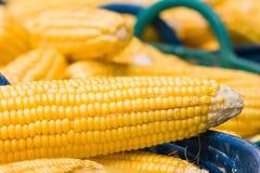 Fresh corn in basket Stock Images
