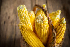 Fresh Corn in Basket on the wooden background, selective focus, Royalty Free Stock Photography
