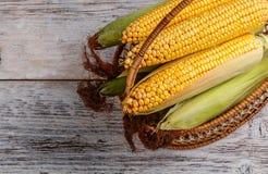 Fresh corn Royalty Free Stock Image