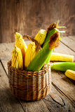 Fresh Corn in a Basket on the wooden table Stock Images