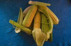 Fresh corn on a blue tablecloth. Top view Royalty Free Stock Images