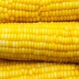 Fresh corn. Stock Image
