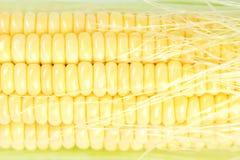 Fresh corn closeup Stock Photos