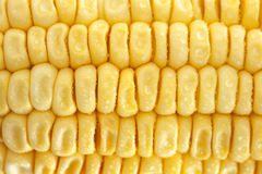 Fresh corn closeup Stock Image