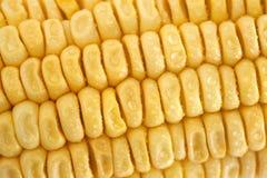 Fresh corn closeup Stock Image